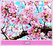 mc-Cami